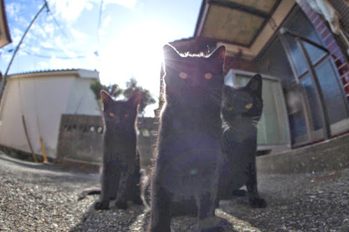 Kedi Adası | ete Kuran Kediler