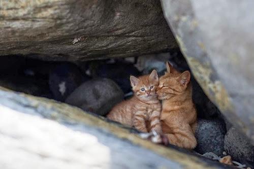 Kedi Adası | Anne Kedi ve Yavru Kedi
