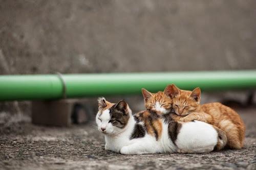 Kedi Adası | Arkadaş Kediler
