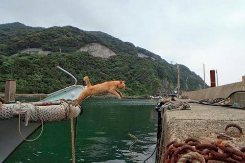 Kedi Adası | Atlayan Kedi
