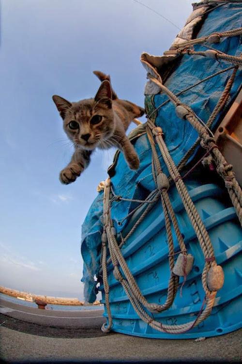 Kedi Adası | Düşen Kedi