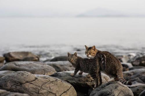 Kedi Adası | Sinirli Kediler