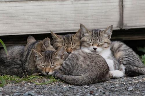 Kedi Adası | Uyuyan Kediler