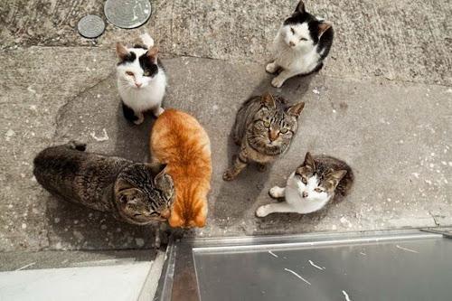 Kedi Adası | Yemek Bekleyen Kedi