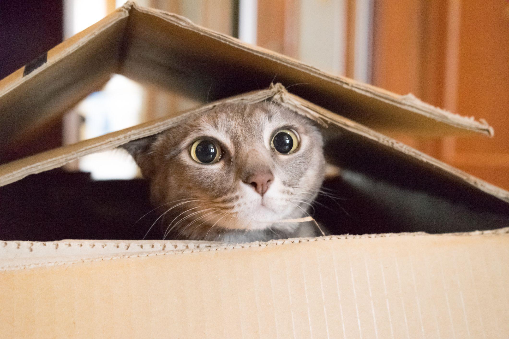 Nasıl Kedi Sahiplenilir?   Kedi Sahiplenmek