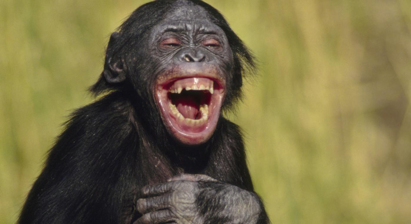 İnsan Neden Güler? | Gülen Maymun