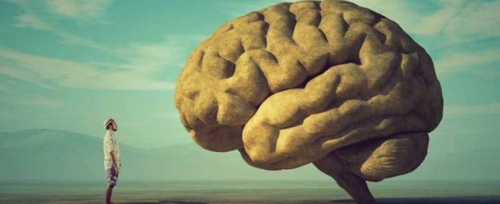 İnsan ve Beyin